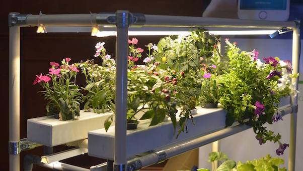 Đèn led trồng cây – Đèn chiếu sáng cho cây trồng trong nhà