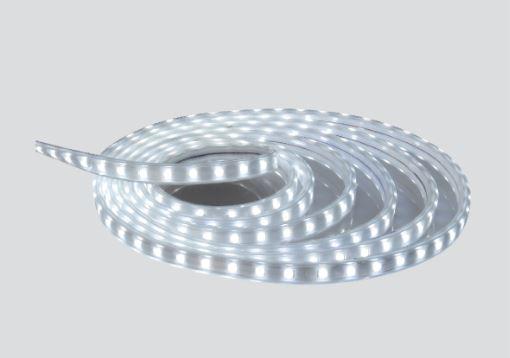 LED dây trực tiếp 5050