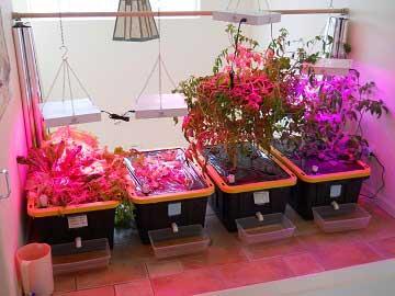 2 điều cơ bản khi chọn đèn LED để trồng cây