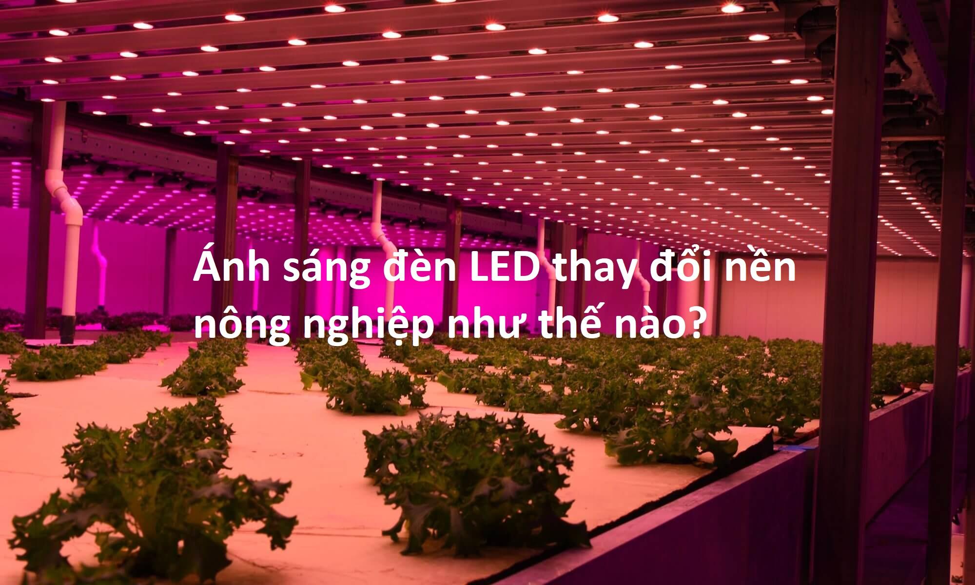 Ứng dụng trong nông nghiệp của pha đèn Led Opple